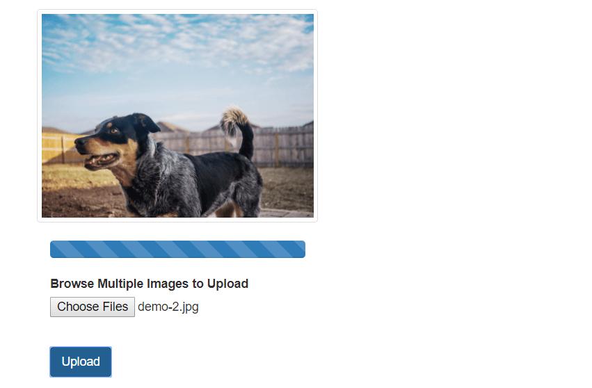 Upload Multiple Image File with Node js | coderszine